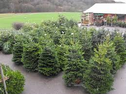 1st Putney Scouts Christmas Trees