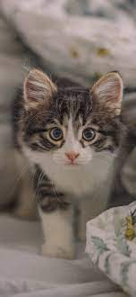 10 Cute Cat Wallpapers For Your Phone ...
