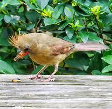 Introducing – Bernadette the Brave   Birding Life