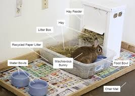 bunny area with litter box food dishes and hay feeder