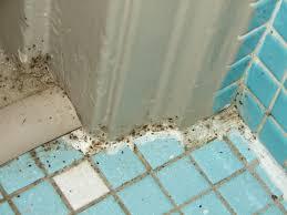bed bugs in bathroom. Bed Bugs In Bathroom Image 2017 B