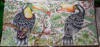 Small Picture Two toucans from the adult coloring book Animorphia just pinned a