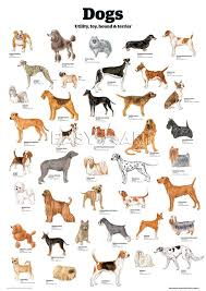 Dog Breed Chart Dogs Utility Toy Hound Terrier Guardian Wallchart