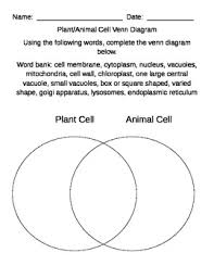 Chloroplast Mitochondria Venn Diagram Plant And Animal Cell Comparison Using Venn Diagram By Mrsdonovan5