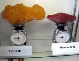 Zijn spieren zwaarder dan vet