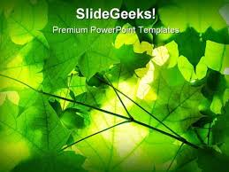 Green Leaves Nature Powerpoint Template 1110   Wedding Templates ...