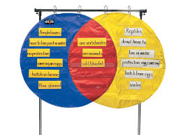 How To Read A Venn Diagram With 3 Circles School Smart Venn Diagram Pocket Chart 3 Circles 4 X 35 1 2 Inches 23 Pockets