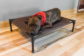 a dog laying on top of our pick for best cot dog bed the k h