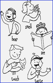 Five Senses Coloring Pages Free Chronicles Network For