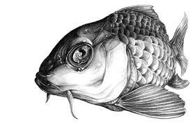 realistic koi fish drawing.  Drawing Realistic Koi Sketch  Google Search And Realistic Koi Fish Drawing O