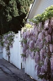 Corner Garden Ideas Fairy Houses and Cheap Rock Garden Ideas. in 2020 |  Dream garden, Cottage garden, Wisteria