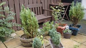 garden bench table and plants