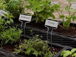 plant an organic container herb garden