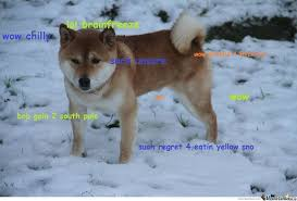 doge snow gif. Beautiful Doge Doge In Snow Throughout Gif