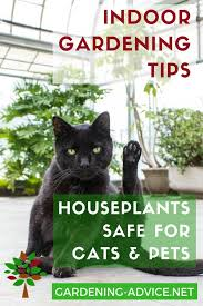 which house plants are safe for cats gardening gardeningtips houseplants houseplantcare