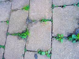 how to keep weeds from growing between pavers