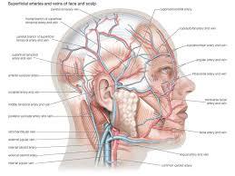 Add to favorites 2 favs. The Human Body Quiz Britannica