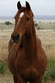 the pretty horses essay all the pretty horses essay