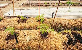 beginner s guide to straw bale gardening