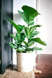 office plants no light. Perfect Office Plant Terrific Find Your Indoor Style Plants No Light E