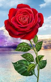 rose flower wallpaper for mobile phone. Screenshot Image On Rose Flower Wallpaper For Mobile Phone