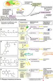 Жирорастворимые витамины Жирорастворимые витамины 353