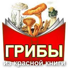 Виды грибов занесенные в Красную книгу России  Грибы занесенные в красную книгу