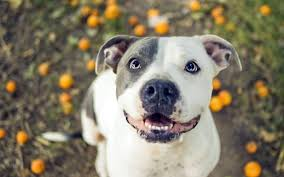 2560x1600 dog wallpapers magnificent Â