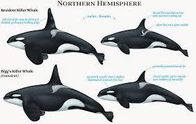 tilikum breeding chart. Contemporary Breeding NOAA Chart For Tilikum Breeding Chart C