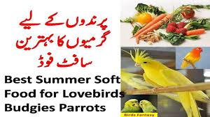 Cockatiel Diet Chart Best Summer Food For Budgies Lovebirds Cockatiel Soft Food For Birds