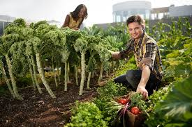 how to be a gardener. How To Be A Successful Rooftop Gardener L