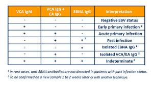 Ebv Interpretation Chart Can Cbd Oil Kill Epstein Barr Virus