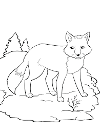 Arctic Animal Coloring Pages Coloring Pages And Fun Worksheets ...