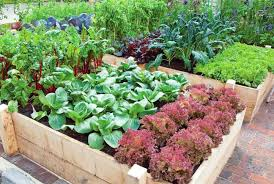gep centres start organic home vegetable garden program