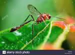 family ichneumonidae