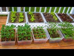 container garden from seed easy step