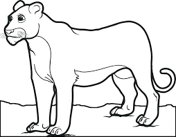 700x545 lion coloring pages to print free printable mountain lion coloring