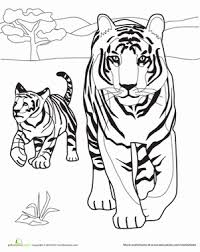 Small Picture Tiger Family Worksheet Educationcom