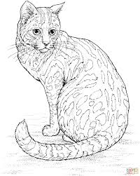 Small Picture Leopard Cat coloring page Free Printable Coloring Pages