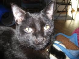 Kiya, Inky Dinky Doo - Mike & Bobbi Skinner - Leroy - Universal Radio  Customer Cats