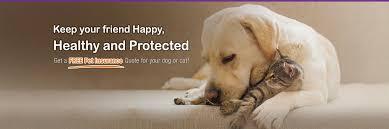 quote for pet insurance 44billionlater