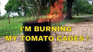 sensational diy tomato cage bamboo