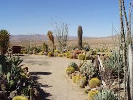 Small Picture Mojave Rock Ranch Reinvents the Desert Garden Garden Design