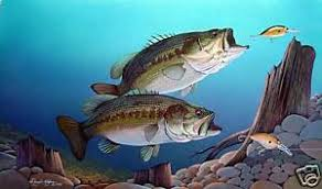 largemouth bass underwater.  Largemouth Image Is Loading LargemouthBassFishingPrint11x14by To Largemouth Bass Underwater T