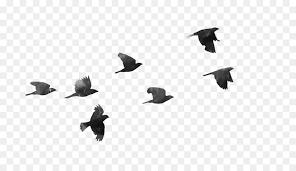 flock of birds clipart. Simple Clipart Bird Clip Art  Flock Of Birds And Flock Of Birds Clipart O