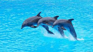 Résultat de recherche d'images pour 'photo dauphin'