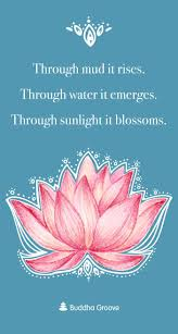 Inspiration From The Lotus Flower Quotes Inspirations Flower