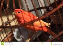 Resultado de imagen de pájaro en jaula