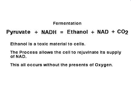 alcohol fermentation reactants and products. fermentation recycles nad+ from nadh. the two most common forms of are: alcoholic and lactic acid fermentation. alcohol reactants products i