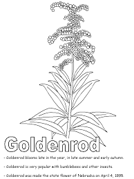 Small Picture Goldenrod coloring page